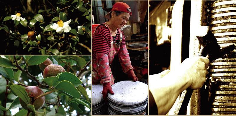 三秋一果(台灣油茶)